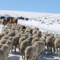 Зимний парад :: Cholpon Zhakypova