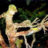 Halloween в лесу :: Валерий Талашов