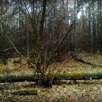 Осень лесные скульптуры творит.. :: Ольга Кривых