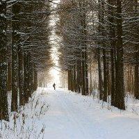 Пейзаж с лыжником :: Александр Буянов