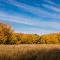 Осень :: Александр Ильин