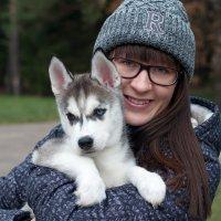 Сибирский Хаски :: Анна Куликовская