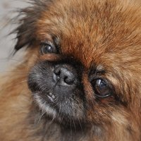 Любимая собачка :: Виктория Кечина