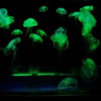 Тайны подводного мира :: Яков Геллер
