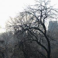 утро во льду :: Svetlana AS