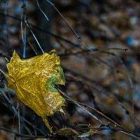 Замёрзший лист :: Яков Реймер