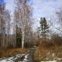 Осенний пейзаж . :: Мила Бовкун