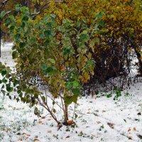 Первый снег :: Анатолий Цыганок