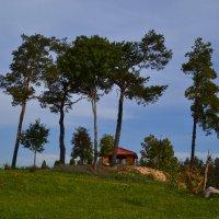 Королевская гора. :: zoja