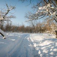 начало зимы :: Андрей ЕВСЕЕВ