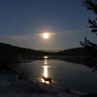 Луна и собака.. :: Галина Полина