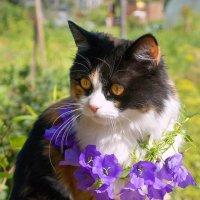 Мишелька в цветочном городе... :: Элен .