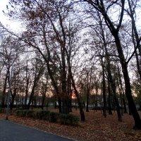 Ноябрь,вечер в парке... :: Тамара (st.tamara)