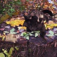 Попался кот мышам на растерзания...или, Леопольд подлый трус, голова, как арбуз... :: олег