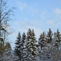 Осенняя дорога (Первый снег) Ярославская область :: Anton Сараев