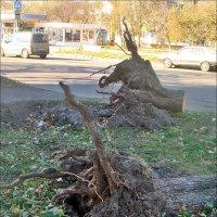 Вывороченные с корнями... :: Нина Корешкова
