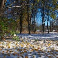 листья на снегу :: юрий иванов