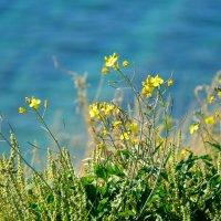 Цветы :: Елена Нор