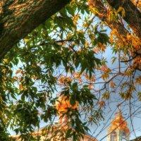Осень :: Leo Alex Photographer