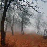 Осенний лес :: Карпухин Сергей