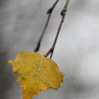 Осенняя слезинка... :: Tatiana Markova