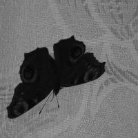 Бабочка в помещении :: Aнна Зарубина