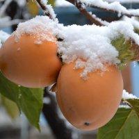 Первый снег :: Виктор Никонов