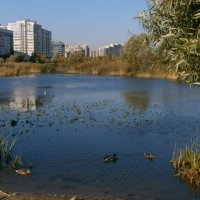 Осенний пруд. :: Валентина Жукова