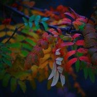 Цветной мир :: М. Дерксен Derksen