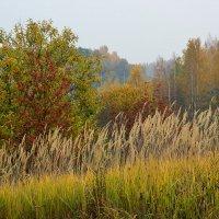 Серый осенний день :: Miola