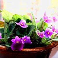Цветок на окне :: Антон Зайцев