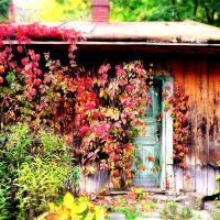 Осенне многоцветие :: Юлия Беленкова