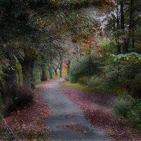 Осенний парк :: Дмитрий Лебедихин