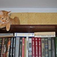 Я такое не читаю.. :: Елена Федотова