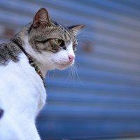 Кошка острова Пи-пи Дон. Таиланд. :: Юлия