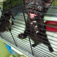 Легко ли дается расставание котятам? :: Андрей Лукьянов