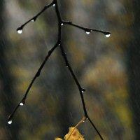 Осень :: Юрий Гординский
