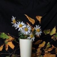 Осенние ромашки :: Карпухин Сергей