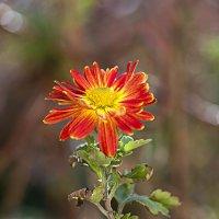 Аленький цветочек :: Елена Васильева