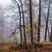 Мерцающей туманной тишиной... :: Лесо-Вед (Баранов)