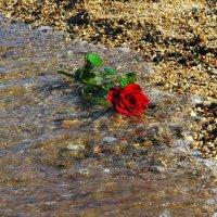 Умытая морской волной. :: Маргарита ( Марта ) Дрожжина