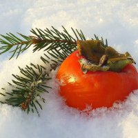 Солнце на снегу :: Павлова Татьяна Павлова