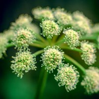 flower :: Алексей Мощенков