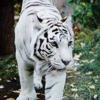 Московский зоопарк :: Zlata Tsyganok