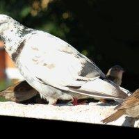 масштабы :: linnud