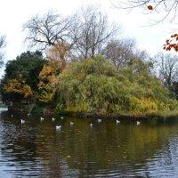 Парк в центре Дублина. :: zoja