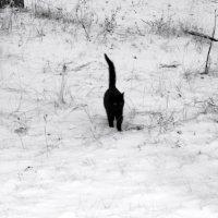 по первому снегу :: sv.kaschuk