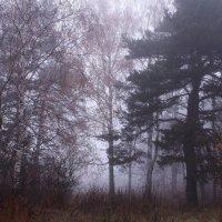 Ой, туманы мои, растуманы,   ой, родные леса и луга :: Татьяна Ломтева