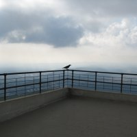 одинокий ворон :: Жанна Румянцева