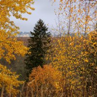 Вологодская осень :: Валерий Талашов
